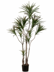 Set of 2 - 6' Dracaena Marginata Artificial Trees - Indoor/Outdoor