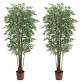 Set of 2 - 6' Mini Japanese Maple Silk Trees