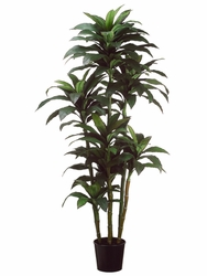 Set of 2 - 6' Multi Trunk Broad Leaf Artificial Dracaena Trees