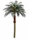 Set of 2 - 6' Phoenix Silk Palm Trees - Non Potted