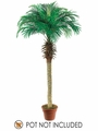 Set of 2 - 6' Phoenix Silk Palm Trees - Non Potted - 50% Off for a Limited Time Only