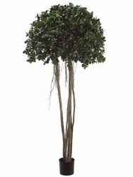 Set of 2 - 6' Silk Ficus Panda Trees