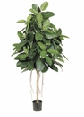 Set of 2 - 6' Tropical Silk Rubber Trees With 174 Leaves Each