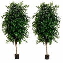 Set of 2 - 7' Extra Full Silk Ficus Trees in pots