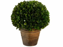 "Set of 2 - 8.2"" Preserved Boxwood Ball Topiaries"