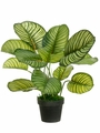 "22"" Artificial Silk Eva Apple Leaf Plant in Pot - Set of 2"