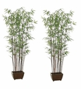 Set of 2 - Bamboo Wall Silk Trees With Dark Trunks - 6'