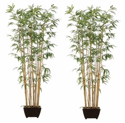 Set of 2 - Bamboo Wall Silk Trees With Natural Trunks - 6'