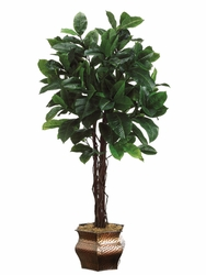 Set of 4 - 6' Artificial Rubber Trees in Designer Containers