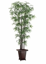 Set of 4 - 8' Black Bamboo Silk Trees in Designer Planters