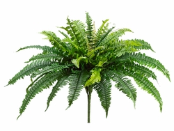 "23"" Boston Silk Fern Plants - Set of 6"