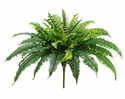 "Set of 6 - 23"" Boston Silk Fern Plants"