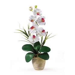 "21"" Single Stem Phalaenopsis Silk Orchid Arrangement in White"