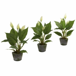"11"" Spathyfillum with Cement Planter (Set of 3)"