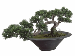 Trailing Artificial Cedar Bonsai Tree Arrangement