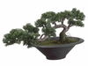 "14"" Trailing Artificial Cedar Bonsai Tree Arrangement"