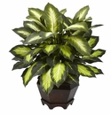 "22"" Triple Golden Dieffenbachia with Wood Vase"