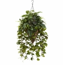 Vining Mixed Greens w/Cone Hanging Basket