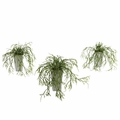 "10.5"" Wild Grass with White Vase (Set of 3)"