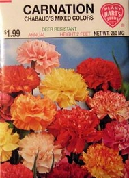 Carnation Chabauds Mixed Colors