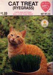 Cat Treat - Ryegrass