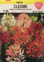 Cleome Mixed Colors (Spider Flower)