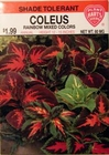 Coleus - Rainbow Mixed Colors