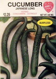 Cucumber Japanese Long