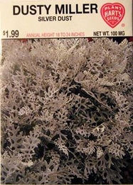 Dusty Miller Silver Dust