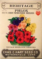 Phlox Drummondi Mixed