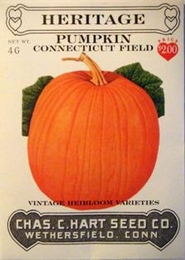 Heritage Pumpkin Connecticut Field