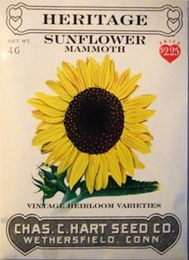 Heritage Sunflower Mammoth