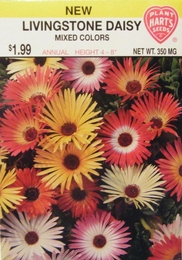 Daisy Livingstone Mixed Colors