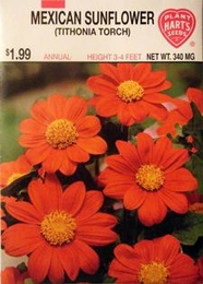 Tithonia Torch Mexican Sunflower