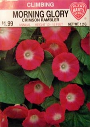 Morning Glory Crimson Rambler