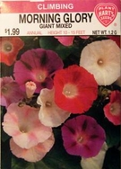 Morning Glory Giant Mixed