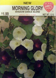 Morning Glory Shadow Dance