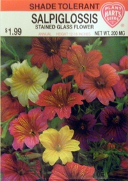 Salpiglossis Stained Glass Flower