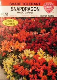 Snapdragon Magic Carpet
