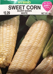 Corn Silver Queen- White