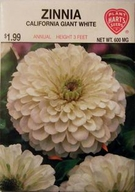 Zinnia California White