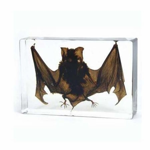 Vampire Bat in Lucite-Large - Click to enlarge