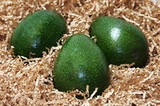 Avocado of the Month Club - 3 Month Subscription