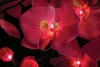 Lighted Floral Tropical Pink Orchid 16 Lights