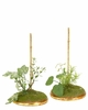 Mark Roberts 7 inch Spring Ivy Stand set of 2