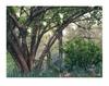 Radiance Light Canvas Lighted Enchanted Woods Canvas