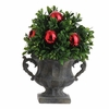 RAZ  7 inch Boxwood Topiary in Garden Urn with Red Christmas Ornaments