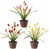 RAZ Bunny Tales 14 Inch Potted Tulips