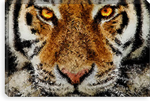 Animal Art - Tiger By Maximilian San Canvas Print #MXS38
