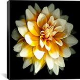 Dahlia By Susan Barmon Canvas Print #9119